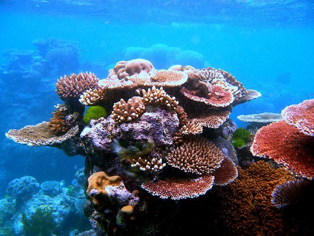 Coral reef 12