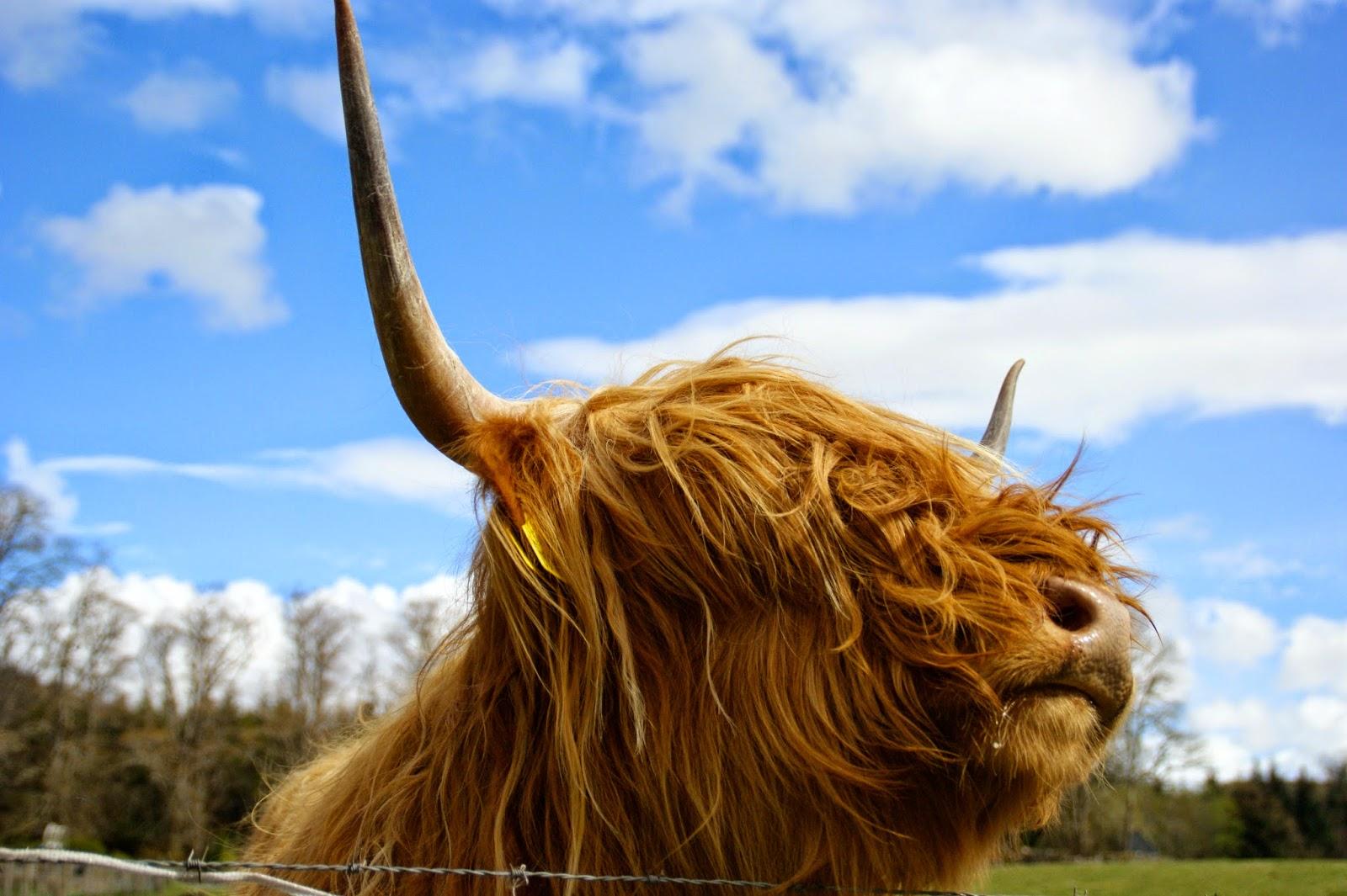 Sarahlindes Blog Verreist Schottland Teil Ii