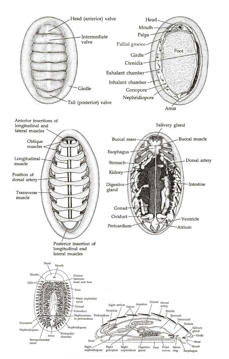 MolluscMonday \