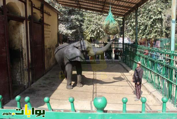 حديقة الحيوان والخروج في شم النسيم