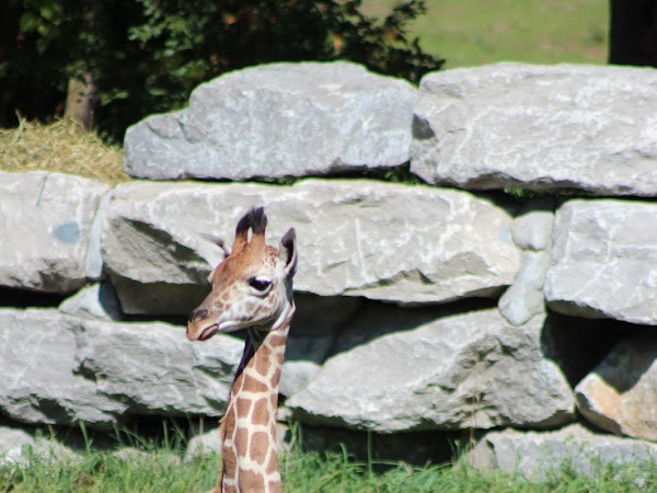 Travel Diaries: Detroit Zoo
