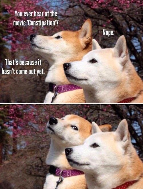 Funny Dog Constipation Movie Joke Picture