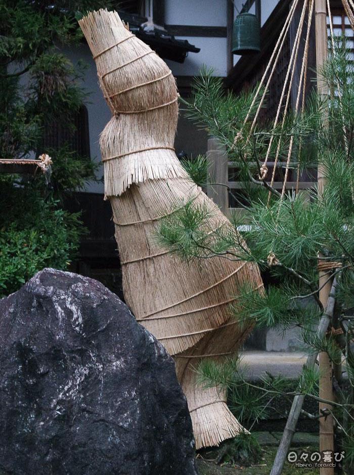fuyu-gakoi protégeant un cycas