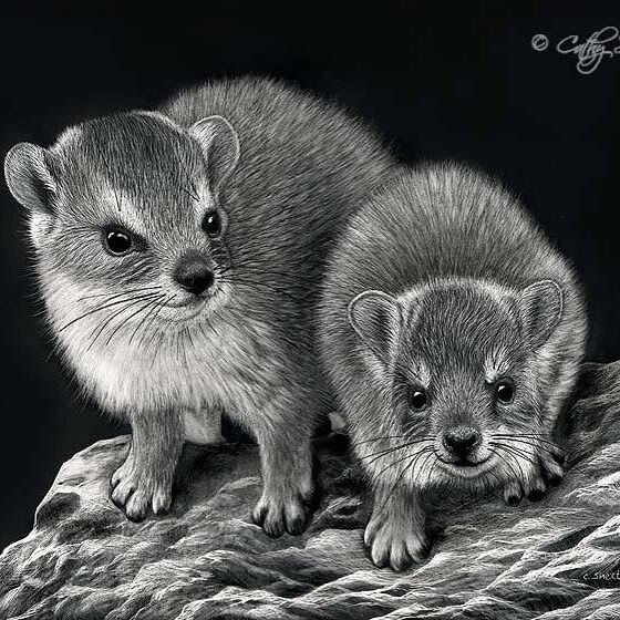 06-Two-Hyrax-Cathy-Sheeter-Wildlife-Scratchboard-Drawings-www-designstack-co
