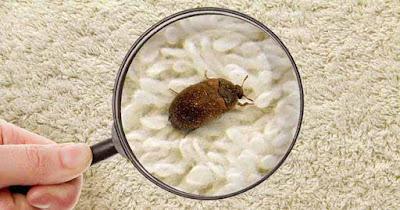 شركة مكافحة حشرات بجدة للقضاء عليها برش مبيدات فعالة