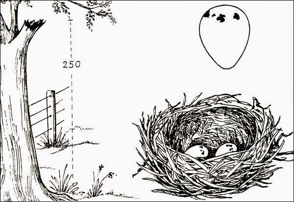 monjita nest