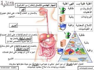 ملخصات النشاط العلمي للمستوى الرابع ابتدائي