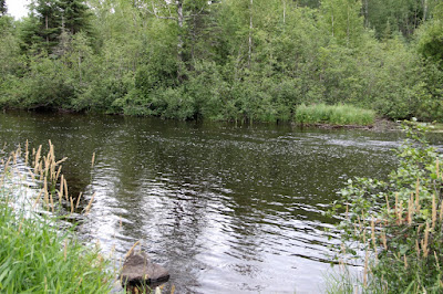 North Country trout stream