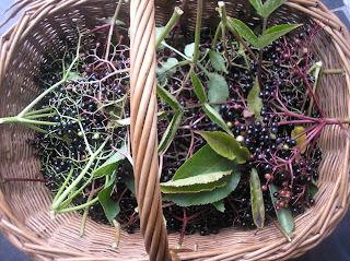 foraging, fleetneedles forage