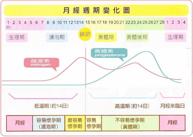 黃體素(Progesterone)與月經週期,月經不來,生理期不順,聖潔莓助孕