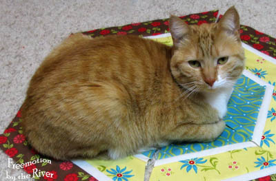Kitty on my quilt project