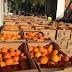Δωρεάν διανομή πορτοκαλιών από την ΠΕ Θεσπρωτίας