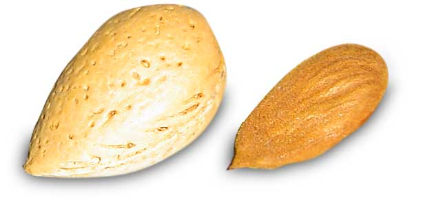 almedra-gajo