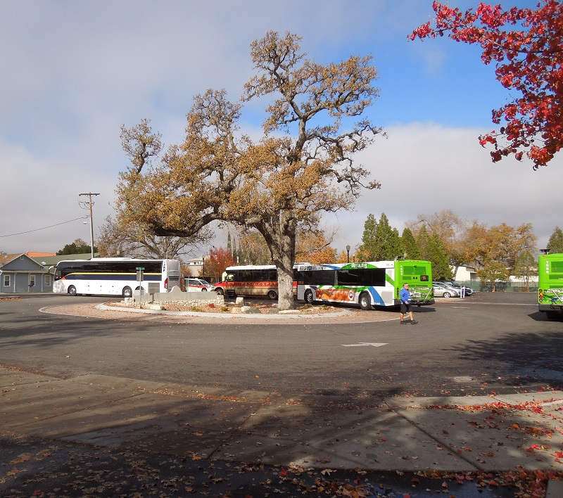 Photos of North County Transport Center Buses