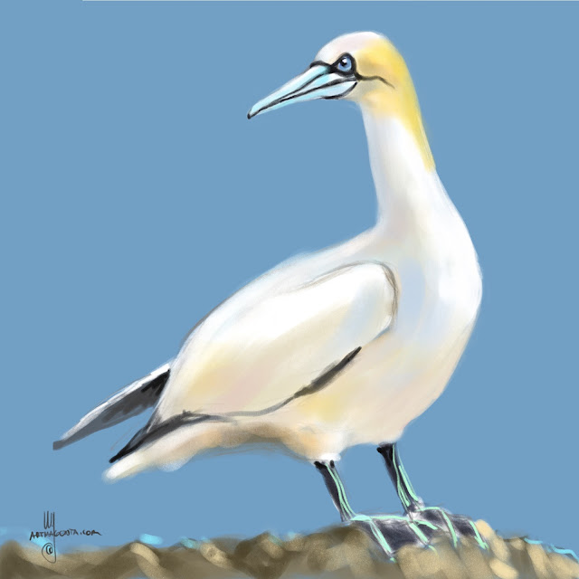 Gannet bird painting by Artmagenta