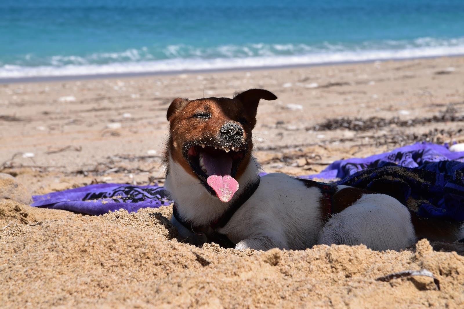 pes na pláží v Řecku