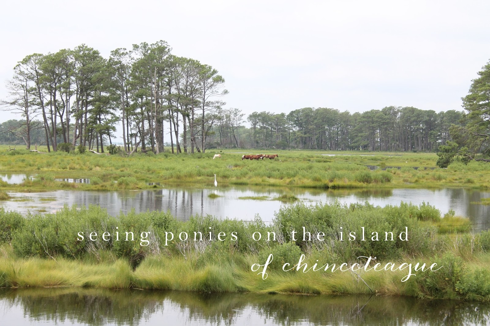 Housewarming Gifts For First Home Wild Horses In Chincoteague Virginia