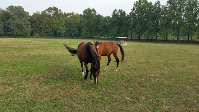Cavalli al pascolo