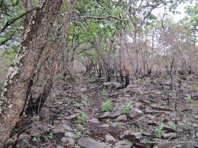 2- Rastros de incendio en Cerro Viejo, bosque subcaducifolio