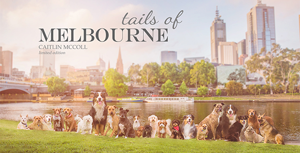 Tails-of-Melbourne-book-Ragamuffin-Pet-Photography