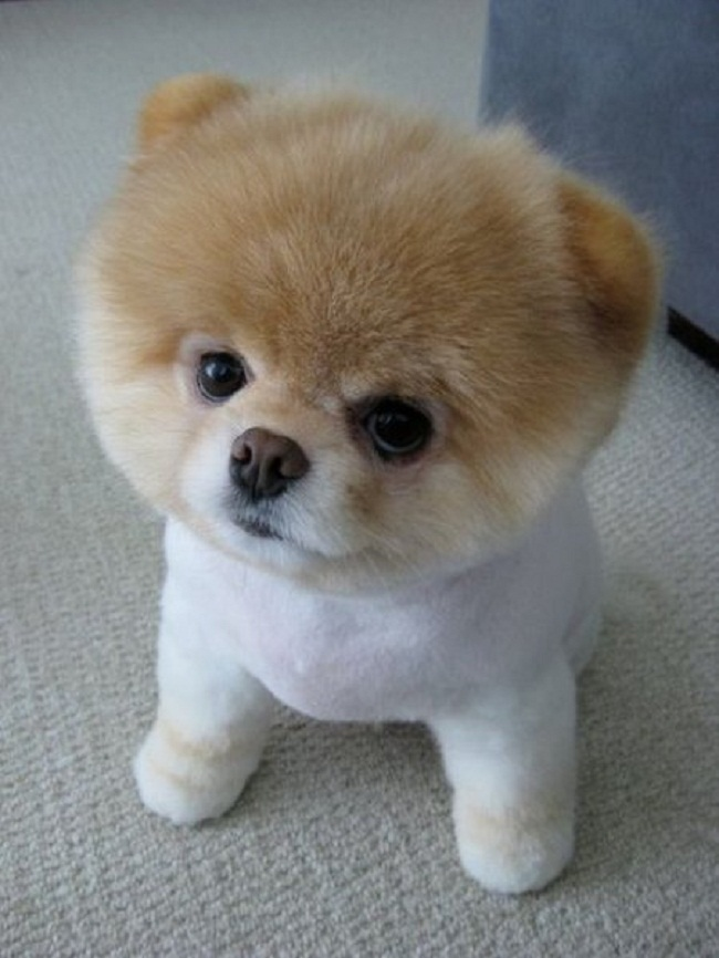Which Small Dog Breed Is Right For Me Luv My Dogs