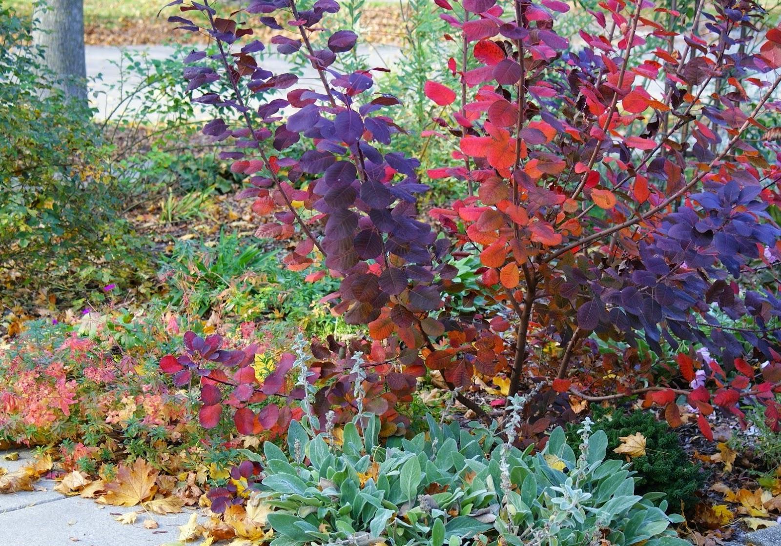 Visit My Garden: Rose Garden in Autumn
