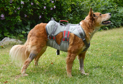 Strength-rated climbing safety harness for dogs