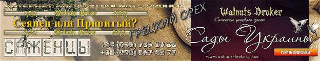 Купить привитые саженцы грецкого ореха Идеал, Кочерженко, Иван Багряный в Украине