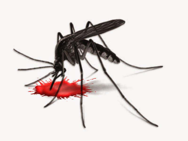 Mengenali Gejala Demam Berdarah Pada Anak Dan Balita