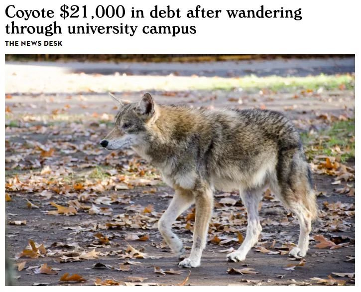 Coyote $21,000 in debt after wandering through university campus
