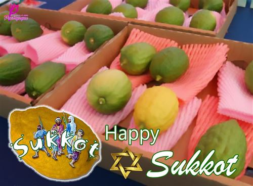 Best Correct Greeting For Sukkot