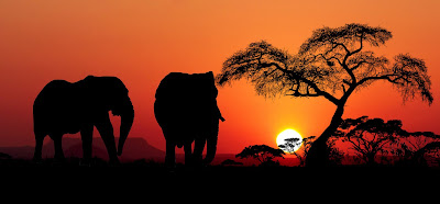 サバンナの地平線に沈む太陽とシルエットで浮かぶ二匹の象
