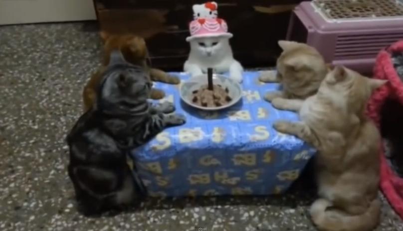 Famoso Auguri dai Gatti che festeggiano!   Auguri di buon compleanno YG05