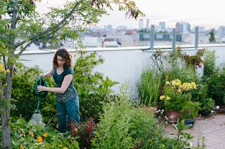 urban homesteading for beginners