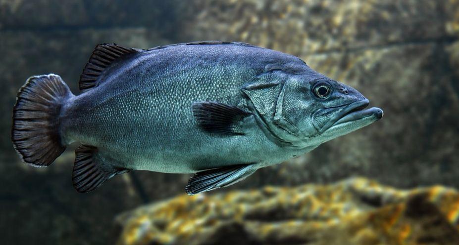 Cara Membersihkan Ikan Laut dan Ikan Air Tawar Yang Benar