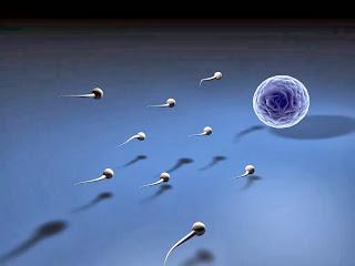 sedang dikembangkan oleh para ilmuwan di Inggris Pil KB Baru untuk Alat Kontrasepsi Pria