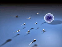 Cara Tidur Yang Benar Semoga Sperma Tetap Sehat