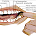 If You Feel Pain on a Specific Tooth Something Wrong on This Body Part