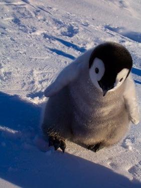 Pinguin Berlin