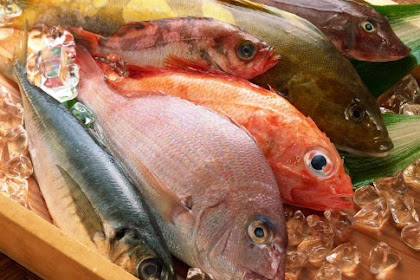 Is Eating Fish Every Day, Really Healthy? This is the explanation!