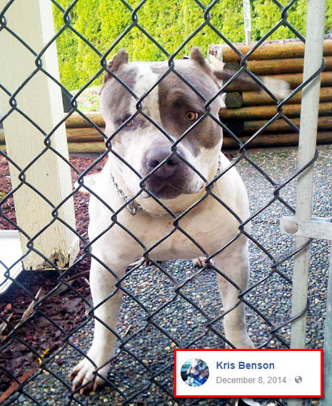 Four legged friends (and enemies): Canada: Violent pit bull