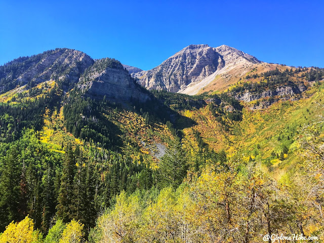 Hiking to Julie Andrews Meadow, American Fork Canyon, Utah, Hiking in Utah with Dogs