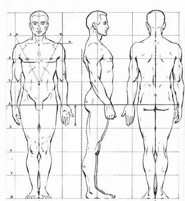 A B C D VISUAL: Imágenes del canon de la figura humana.