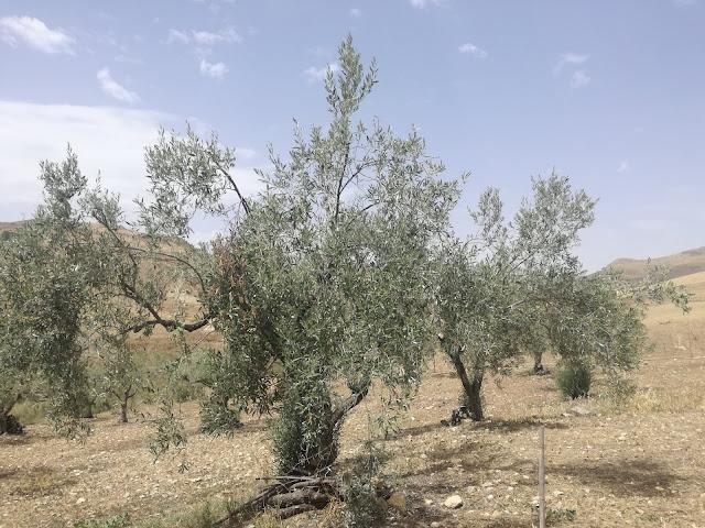 krajobraz Sycylii