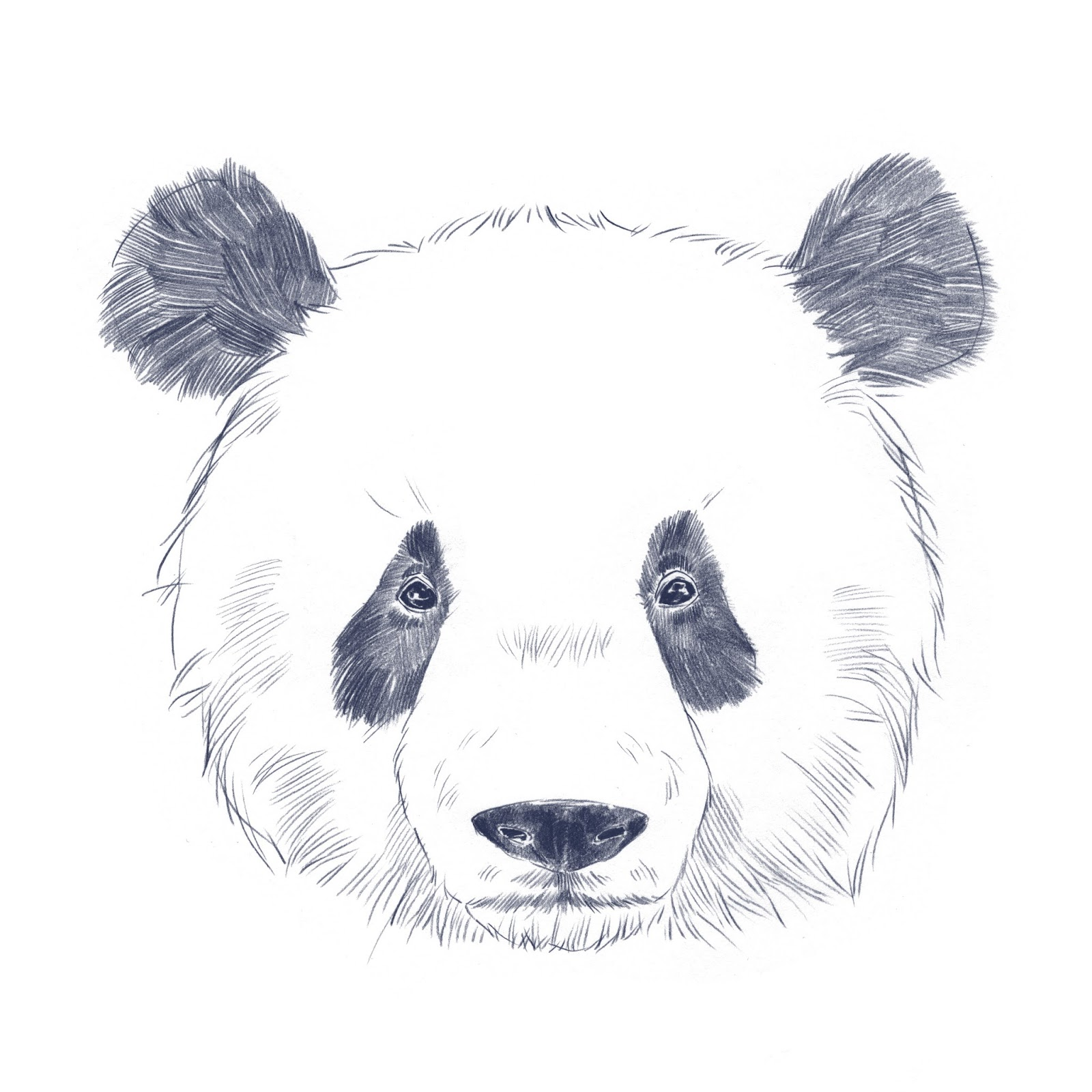 Panda Head Tumblr - ma