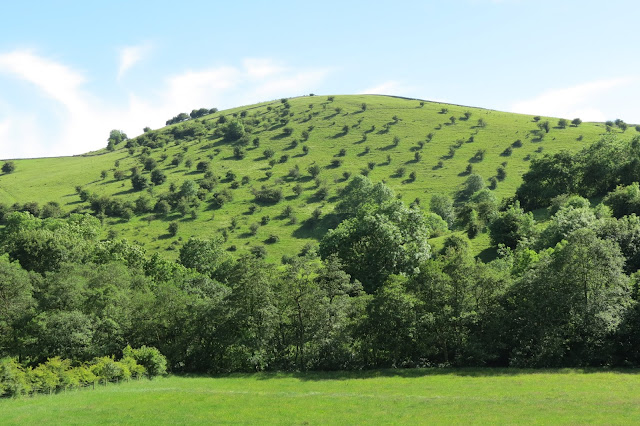 A meadow and a line of trees in the foreground - behind, a steep hillside rises up, dappled with trees and their shadows.