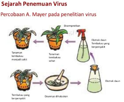 Sejarah Penemuan Apa itu Virus Adolf Meyer