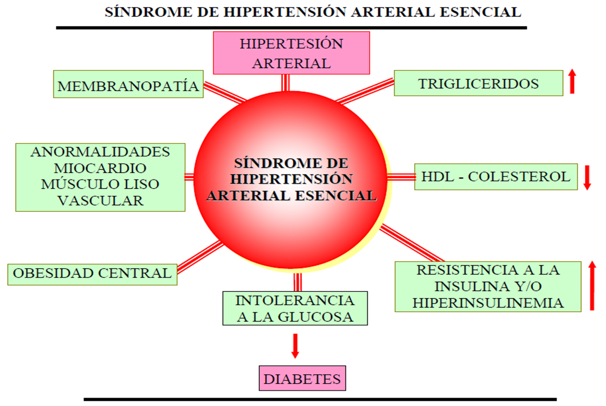 Hipertensión Arterial: 07/02/12