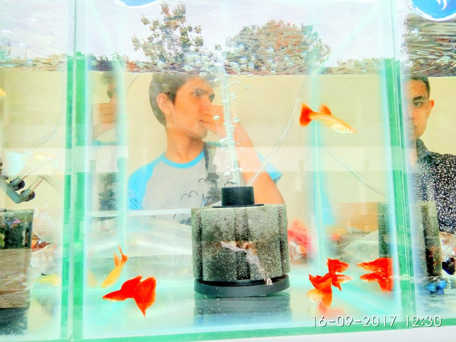 Ukm Mpv Wana Adakan Kontest Ikan Cupang Besar Besaran Di Kampus Ungu Unsyiah