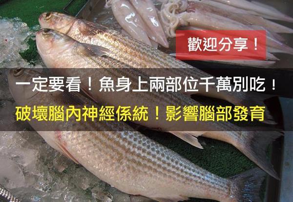 一定要看!魚身上兩部位千萬別吃! 破壞腦內神經系統!影響腦部發育!   內幕人